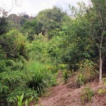 riparian revegetation